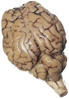 Best sheep brains for dissection Reviews