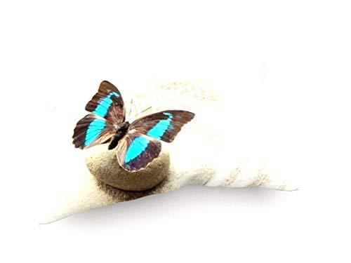 weewado Papillon Prepona Laerte sur Le Sable 60x40 cm Canapé Coussins - Art, Image, Peinture, Photo - Animaux