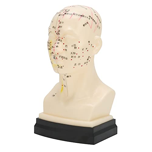 Lettering Acupuncture Model, Acupuncture Model Exquisite Hraftsmanship Preciso and Clear Exquisite Details Durable for Home for Teacher