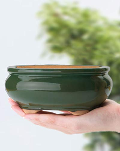 Shear Zen Bonsai Pot 6 Inch Glazed Green Decorative Planter Oval Ceramic...