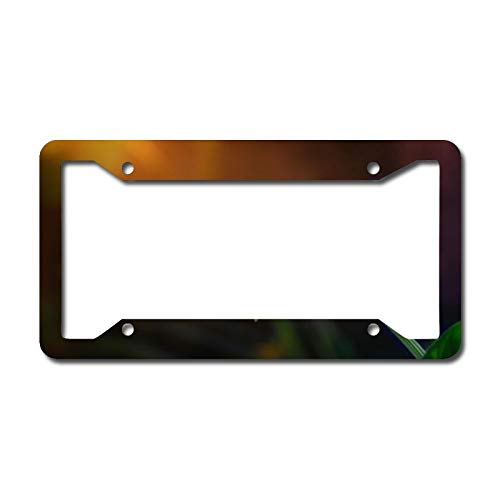 Yellow Daisy License Plate Frame Aluminum Metal License Plate Frame Car Tag Novelty Home Decoration for Women Girls Men Boys 6.3 X 12.2 Inch