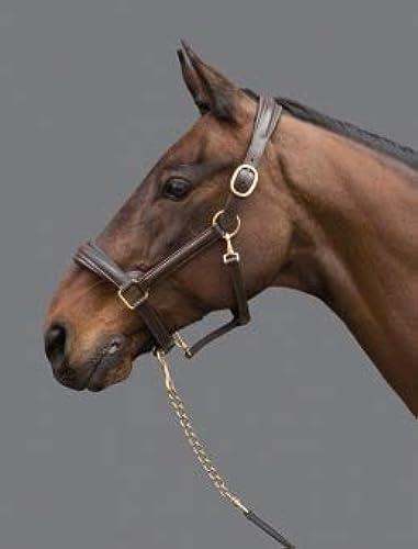 Mountain Horse Halter, noir Brass, Vollbleut