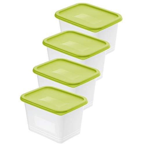 Rotho Domino 4er-Set Gefrierdose 1l mit Deckel, Kunststoff (PP) BPA-frei, grün/transparent, 4 x 1l (15,7 x 11,8 x 15,5 cm)