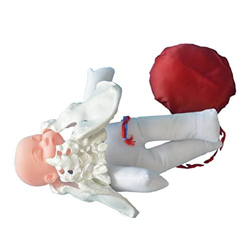 HJK Modelo Femenino Pelvis Parto, Pelvis Femenina Modelo de Demostración, Elikliv Incluye Modelos de Simulación de la Pelvis y del Bebé