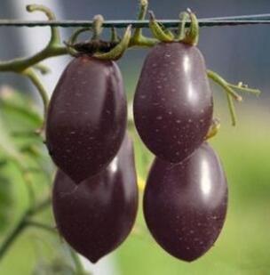 100 pcs/paquet Précipité nouvelles Plantes d'extérieur Promotion Jardin semences de tomates en pot fruits Bonsai Balcon de semences de légumes 21