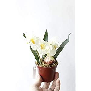 Silk Flower Arrangements Artificial and Dried Flower Silk Iris Bonsai in Pot Artificial Orchid Flower with Vase Set for Wedding Decoration Home Decor Garden Balcony Fake Flowers - ( Color: White )