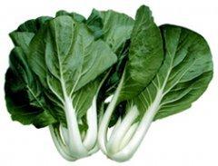 Cabbage Pak Choi White Stem Great Heirloom Vegetable by Seed Kingdom Bulk 20,000 Seeds