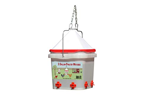 best chicken watering system RentACoop