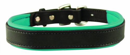Perri's Padded Leather Dog Collar, Black/Turquoise, Large1.25' x 25' fitting dogs with 16 - 20' necks