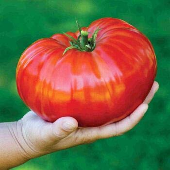 Tomato Seeds for Planting-Beefsteak Tomato Seeds-Vegetables Seeds Organic Non GMO in Your Organic Garden-30Seeds (#3)