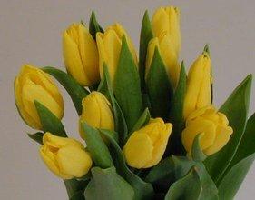 Ramo 20 Tulipanes Naturales Amarillos para Regalar. PORTES GRATIS