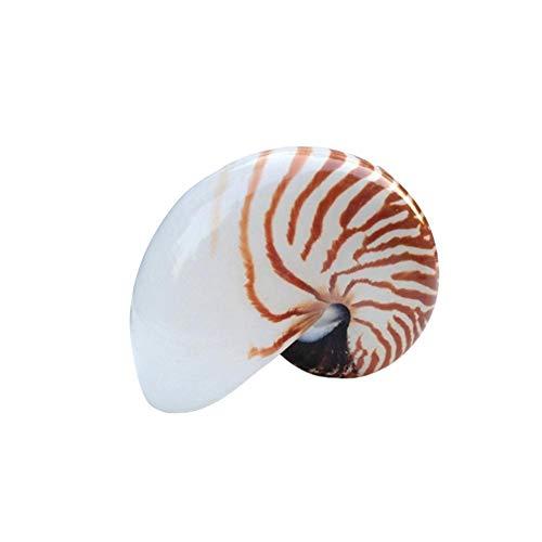 Tangyuandain 1 unids 11-13CM Natural Famoso Tornillo Concha Conchas Mediterráneo Acuario Ornamentos Caracol Mar