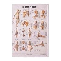 【メディカルブック】3D人体チャート(諸関節と靭帯)(SR-440)
