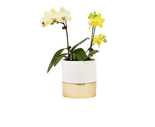 round white with gold bottom planter with orchid growing inside