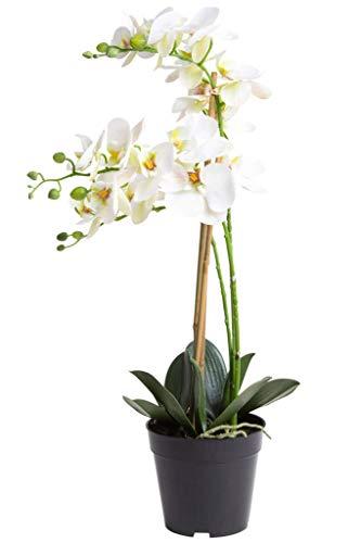 Nova-Nature künstliche Orchidee Bora (Orchideen Pflanze/Phalaenopsis) im schwarzen Kunststofftopf mit Rispen, Blättern und Luftwurzeln real Touch (Creme-weiß, ca. 60 cm / 3 Rispen)