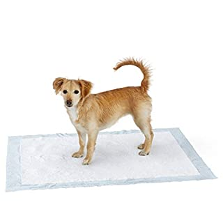 Amazon Basics Dog and Puppy Leak-proof 5-Layer Potty Training Pads with Quick-dry Surface, X-Large (28 x 34 Inches) - Pack of 40 (B016C6EJ4S) | Amazon price tracker / tracking, Amazon price history charts, Amazon price watches, Amazon price drop alerts