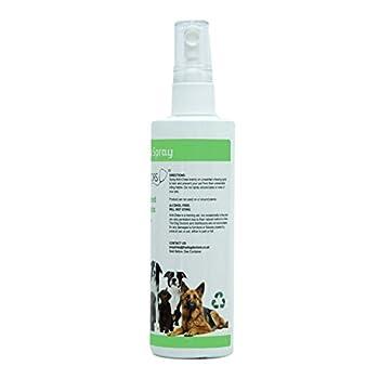 Le Spray Anti-mordillage du docteur pour chien