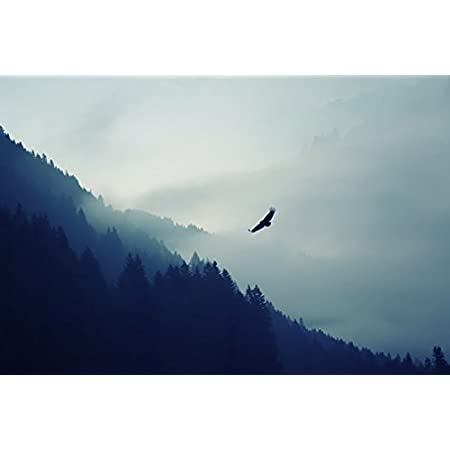 Forest Fog Eagle Landscape No 012121 Poster Art Print On Canvas 75 Cm X 50 Cm Roughly 30x20 Inch Posters Prints