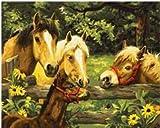WLYUE W042 Pintura de verano de caballos por números, pintura acrílica para decoración del hogar, regalos de Navidad