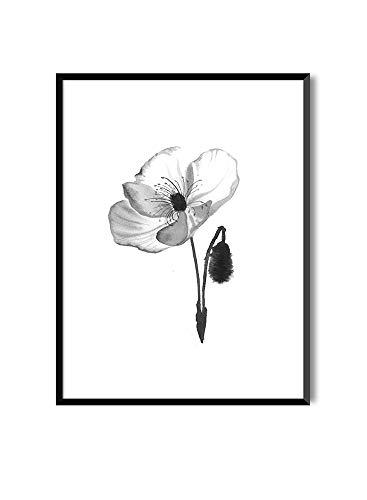MILUKA Láminas para Enmarcar para Cuadro de Estilo Elegante   Póster de Plantas Estilo Acuarela   Poppy   Varios Tamaños (20 x 30 cm)