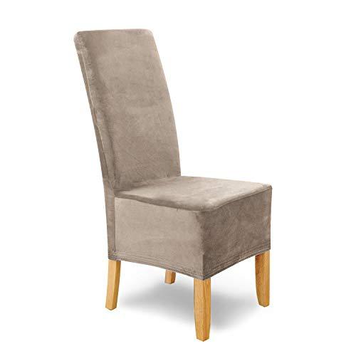SCHEFFLER-Home Puma Velvet Fundas de sillas, Estirable Cubiertas, Terciopelo extraíble Funda con Banda elástica, Piedra-Beige, Juego de 4