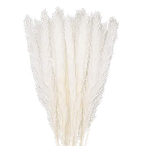 GoMaihe 30 Stück Pampasgras Getrocknet Deko, Trockenblumen Bodenvase Getrocknete Blumen 58cm, Weiß Kunstblumen Boho Deko Schlafzimmer Wohnzimmer Balkon Badezimmer Zimmer Tischdeko Hochzeit, MEHRWEG