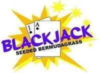 Blackjack Seeded Bermuda Grass Seed- 25# Bulk Warm Season by Blackjack