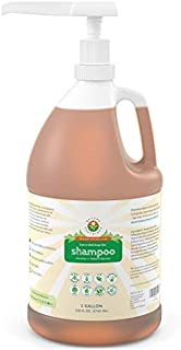 Pure, Sensitive Skin Organic Shampoo [1 Gallon w/Pump] – Raw Probiotic Soapberry Formula (pH Balanced) for Dry Hair, Dandruff & Itchy Scalp – Wild Plants Selected for Eczema, Psoriasis & Dandruff