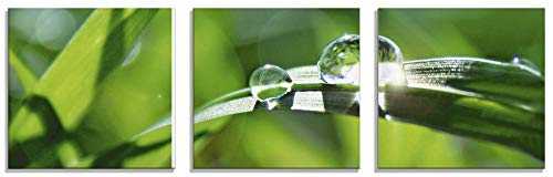 Artland Glasbilder Wandbild Glas Bild Set 3 teilig je 30x30 cm Quadratisch Natur Botanik Pflanzen Gräser Wassertropfen Gras Sommer Sonne Grün T5SE