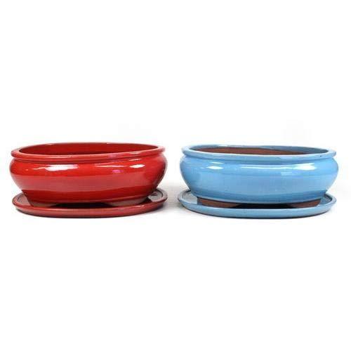 Planeta Huerto Bonsái Tiesto Basic Oval Azul con Plato 30 cm