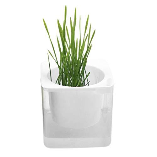 Balai『猫草の種』