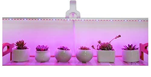 Led Grow Light Ledy 3.2ft 5050 Waterproof Flexible Soft Strip Grow Light for Plant Flower Seeds Seedlings Growing Red Blue 4:1 with DC 12V 2A Adaptor