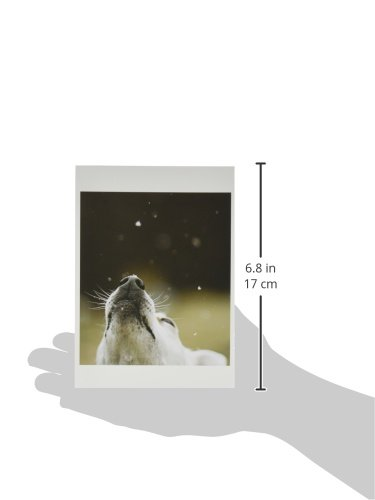 Nouvelles Images Holiday Boxed Note Card Set, In Like a Lion, Out like a Lamb (XDB 415) Photo #2