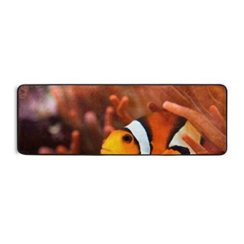 Extra langer Badezimmer-Läufer-Teppich Rutschfester Mikrofaser-Badmatten-Teppich-Läufer für saugfähige Küchen-Bodenteppiche Maschinenwaschbar, Amphiprion Ocellaris Clownfish Marine Aquarium 24 * 72 Z
