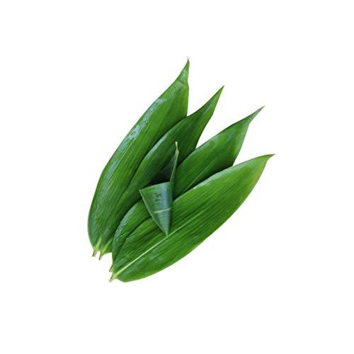 TONGTONG 50 hojas grandes frescas sin cultivar hojas de bambú envasadas al vacío, hojas de bambú salvaje natural barbacoa sushi sashimi cocina decoración material zongzi