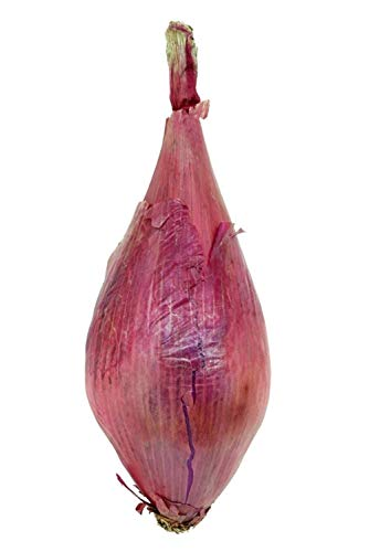 6300 mg lange rote Florenz Zwiebel Samen ~ selten italienische Erbstück ~ mild Allium