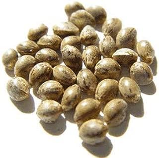 Hemp Planting Seeds, USA Grown - 1 LB