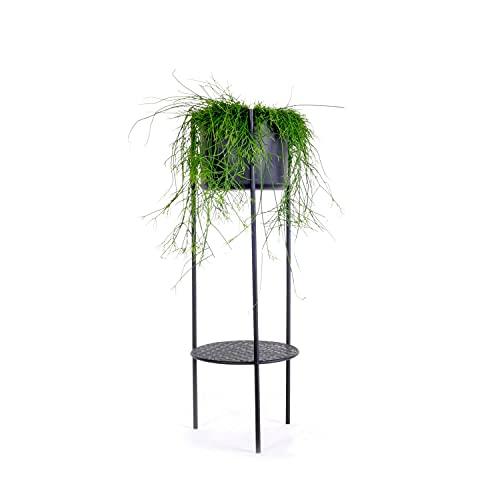 XLBoom Ent-Soporte para Plantas (tamaño Grande), Color Negro, Acero