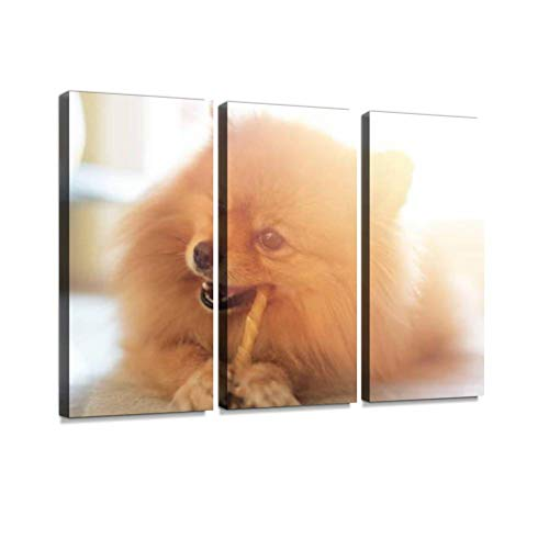 BELISIIS Cute Pomeranian Dog Chewing a Rawhide Chew Stick Wall Artwork Exclusive Photography Vintage Abstract Paintings Print on Canvas Home Decor Wall Art 3 Panels Framed Ready to Hang