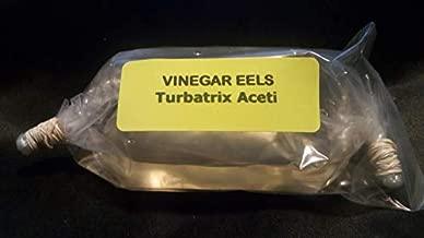 4 OZ Live Vinegar EEL Culture Turbatrix Aceti Starter Fry Food Guppy Betta - B2G1