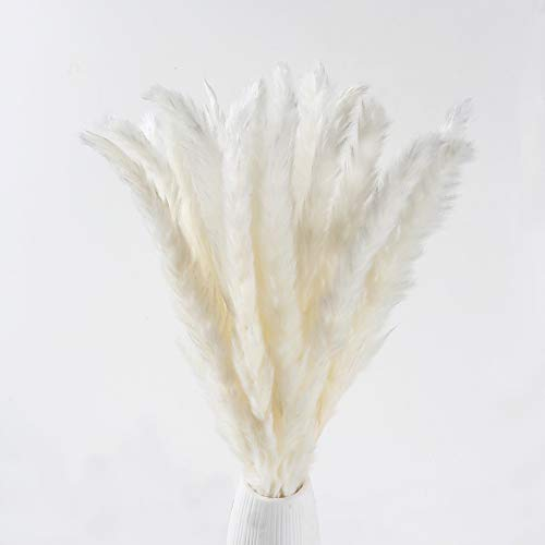 XYXCMOR Dried Pampas Grass Plumes 25pcs 17 Inch Tall Natural Dried Flowers Arrangements for Wedding Vase Door Wreath Decor Artificial Faux Reed Flower Stems Bunch White