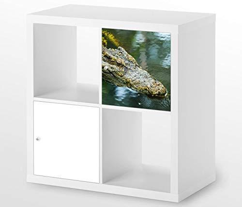 Möbelaufkleber für Ikea KALLAX / 1x Türelement Alligator Krokodil Auge Kat6 Wasser Tier Aufkleber Möbelfolie sticker (Ohne Möbel) Folie 25D454