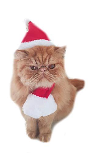 Glamour Girlz Feestelijke Rode Kerstman Hoed & Sjaal Kerstmis Kleine Hond Kat Set, Small, Rood