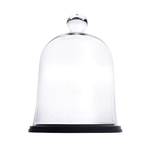 Glass Bell Dome Cloche(With Wood Base)