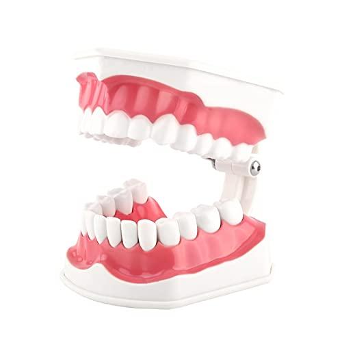Modelo de dientes anatómicos, no tóxico, liviano, fácil de limpiar y empaquetar, encías para adultos, herramienta de demostración estándar, antioxidante para la enseñanza dental o el