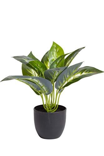 Flora-Seta GmbH Kunstpflanze (Alocasia, Dieffenbachia, Aglaonema, Zebrina, Calathea, Monstera) Höhe 20-30 cm im schwarzen Kunststofftopf (Dieffenbachia)