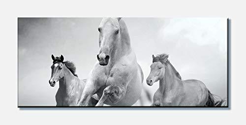 wandmotiv24 Cuadro en Lienzo Caballos Corriendo en Blanco y Negro 100x40cm (Ancho x Alto) Foto panorámica Foto Lienzo Mural Foto Regalos M0945