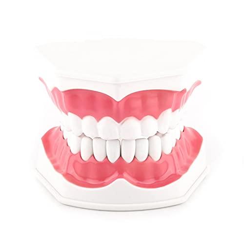 Modelo de demostración dental de dientes, modelo de enseñanza dental para niños, fácil de limpiar y empaquetar, no tóxico, con un práctico cepillo de dientes para la enseñanza dental o el