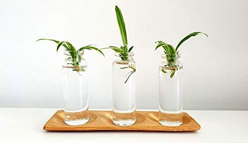 Mini florero en probetas de Cristal   Maceta con Plantas Incluidas  ...