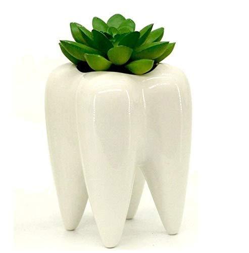 Mecai Tooth Design White Mini Ceramic Plant Flower Pot Succulent Planter,Dental Office Decorations for Men Women Desk Ornament